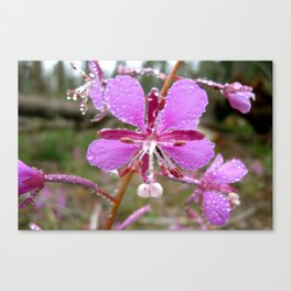 Drenched Pink Flower Canvas Print