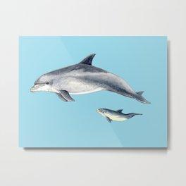 Blue Bottlenose dolphin Metal Print