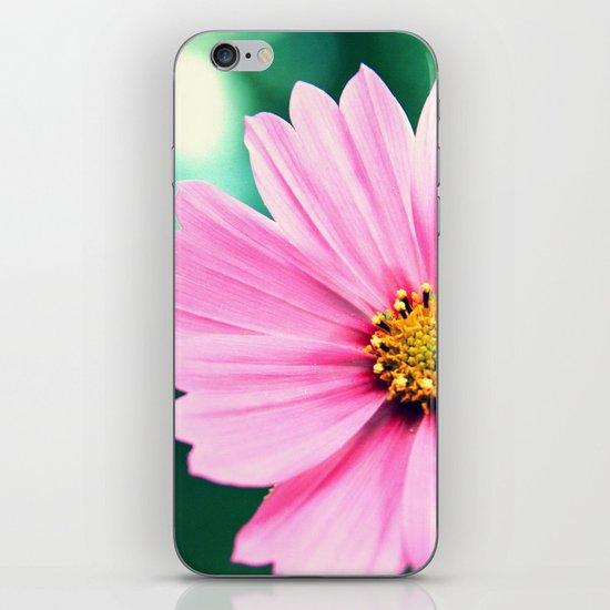 Pretty in Pink iPhone & iPod Skin