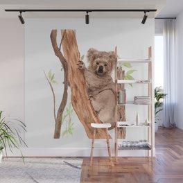 Fluffy Koala Wall Mural