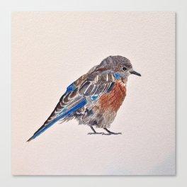 Bird: Bluebird Series | Western Bluebird Canvas Print