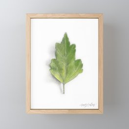 Leaf Study I Framed Mini Art Print