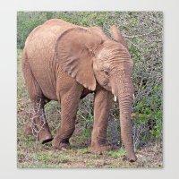 baby elephant Canvas Prints featuring Baby Elephant by Lynn Bolt