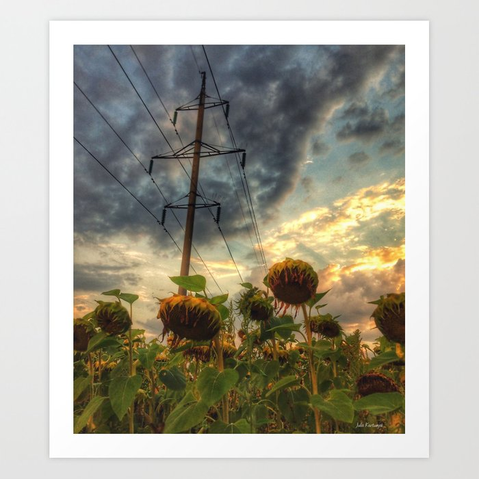 field of faded sunflowers  Art Print