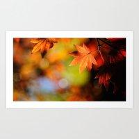 Fall Leaves in Sunlight Art Print