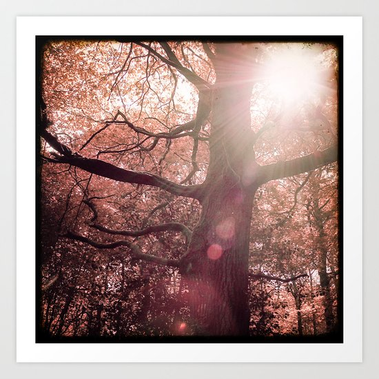 Daydreaming in the Forest Art Print