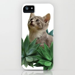 Grey Kitten Cat agave Succulent Leaves iPhone Case