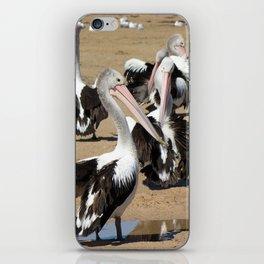 Pod of Australian Pelicans iPhone Skin