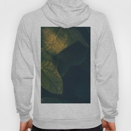 Sensual Green Leaves With Orange Sunlight Accent Hoody