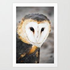 Barn Owl Art Print
