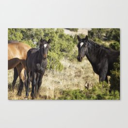 Family Resemblance - Orlando and Norma Jean - Pryor Mustangs Canvas Print