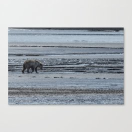 Brown Bear Looking For Clams Canvas Print
