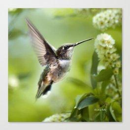 Hummingbird Love Canvas Print