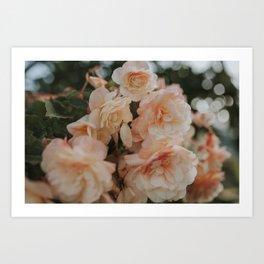 Peach Pastels Art Print