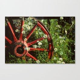 Cartwheel & Daisies             Canvas Print