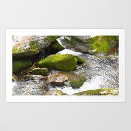 Smokey Mountain National Park Stream Art Print