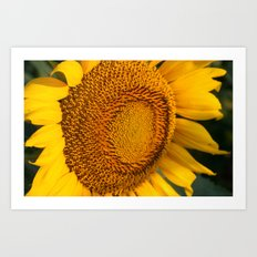 Sunflower Fields Forever - No. 3 Art Print