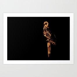 Short eared owl 2 Art Print
