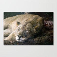 Cat nap II Canvas Print