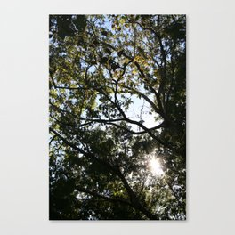 Reaching for the Light Canvas Print