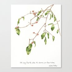 the Viburnum was weary Canvas Print