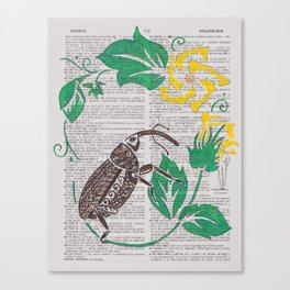 I Shall Fear No Weevil   (Boll Weevil and Cotton Blossoms) Canvas Print