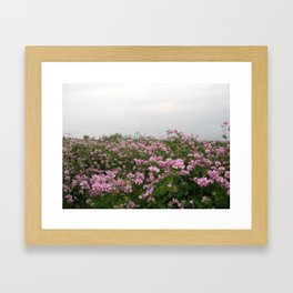 Patch of flowers Framed Art Print