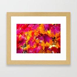 Red Maple Leaves Framed Art Print