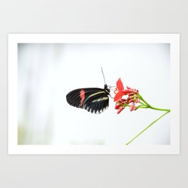 Delicate Beauty Art Print