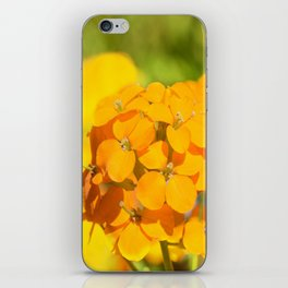 Orange Delight iPhone Skin