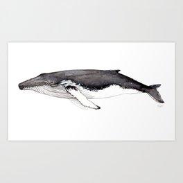 North Atlantic Humpback whale Art Print