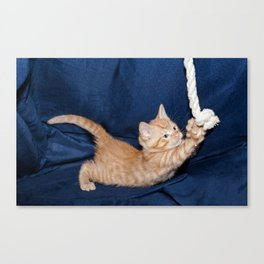 kitten playing with rope in a basket  Canvas Print