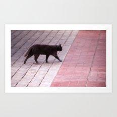 Cat Walking  6589 Art Print