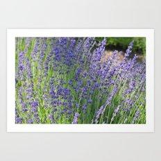Lavender Wave Art Print