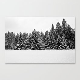 trees at the park Canvas Print