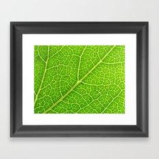 Green Leaf Veins 04 Framed Art Print