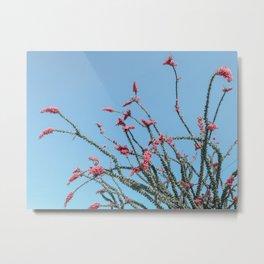 Pink Wildflowers // Cactus Plant Blue Sky Green Long Alien Brances Light Pink Flowers Metal Print