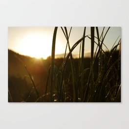 Grass in the Morning Canvas Print