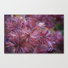 purple pine Canvas Print