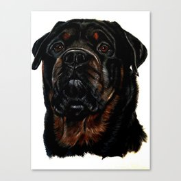 Male Rottweiler Canvas Print