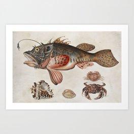 Vintage Fish and Crab Illustration by Maria Sibylla Merian, 1717 Art Print