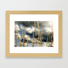 Oregon Gold Framed Art Print