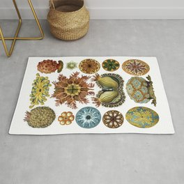 Ernst Haeckel Ascidiae Sea Squirts White Background Rug