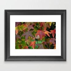 Maple Shapes Framed Art Print