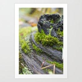 Green Mossy Wood Trunk Art Print