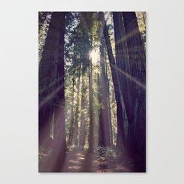 Redwoods Hike Canvas Print