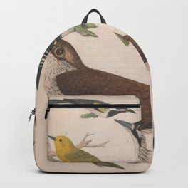 Red cocaded Woodpecker Brown headed Nuthatch Pigeon Hawk Blue winged Yellow Warbler Golden winged Warbler Blue eyed Yellow Warbler Black breasted Blue Warbler13 Backpack
