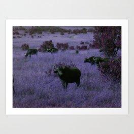 Cape Buffalo in Purple Art Print