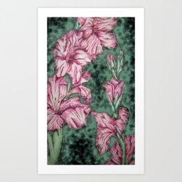 Pink Gladiolas Art Print