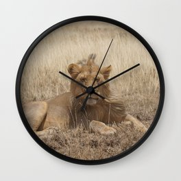 Young Male Lion Wall Clock
